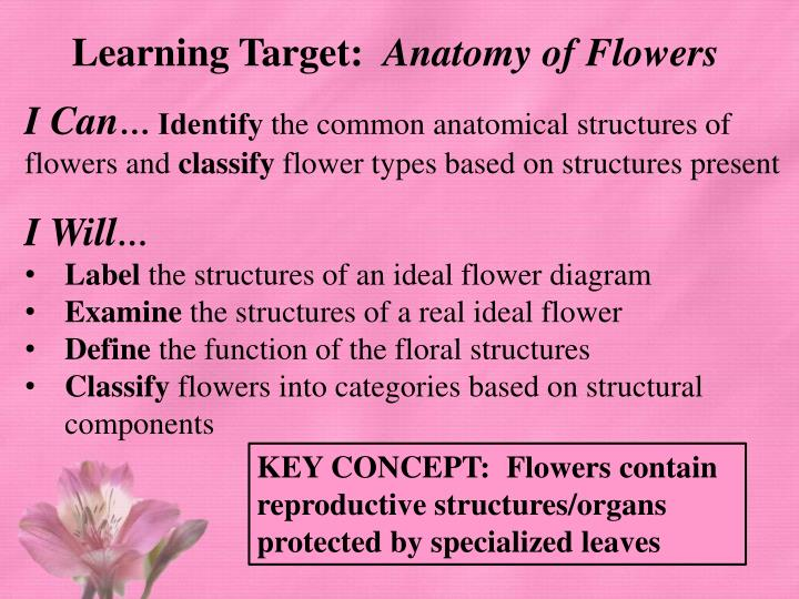 PPT - Learning Target: Anatomy of Flowers PowerPoint Presentation ...