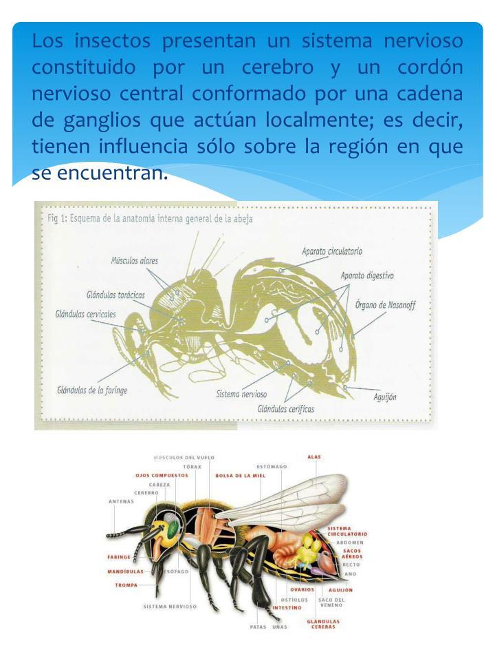 Encantador Diagrama De La Anatomía Esponja Colección - Anatomía de ...