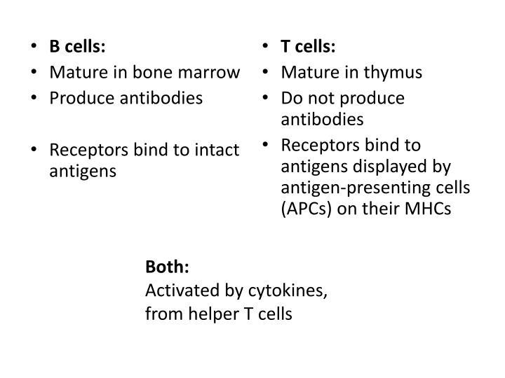 B cells:
