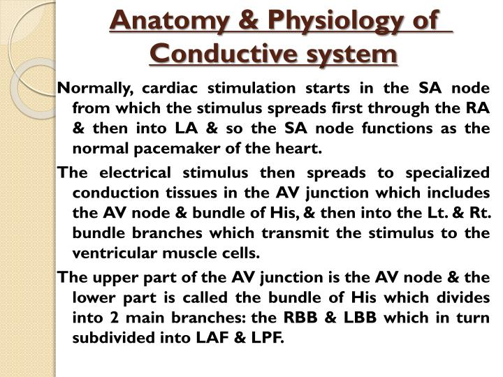 Anatomy physiology of conductive system