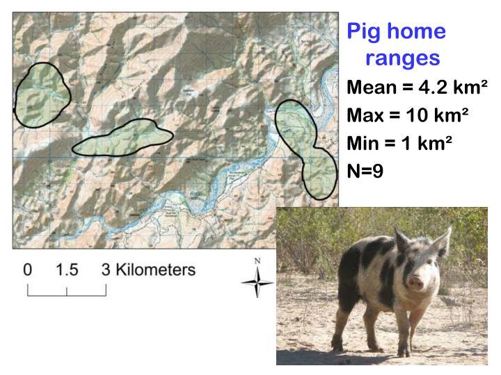 Pig home ranges