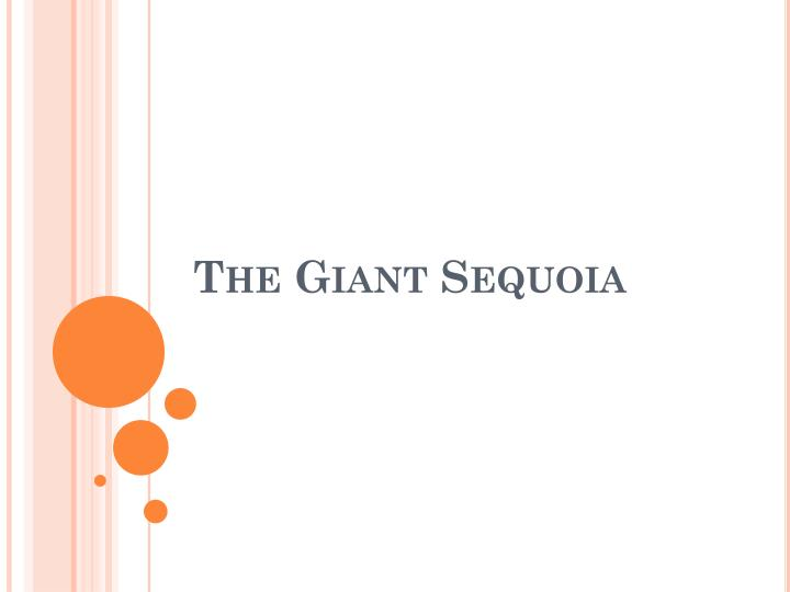 the giant sequoia n.