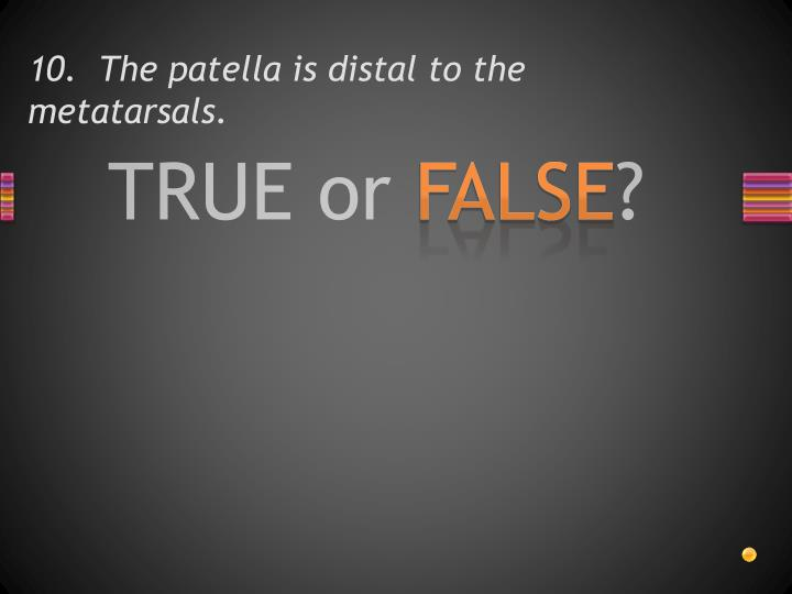 10.  The patella is distal to the metatarsals.
