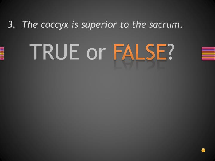3.  The coccyx is superior to the sacrum.