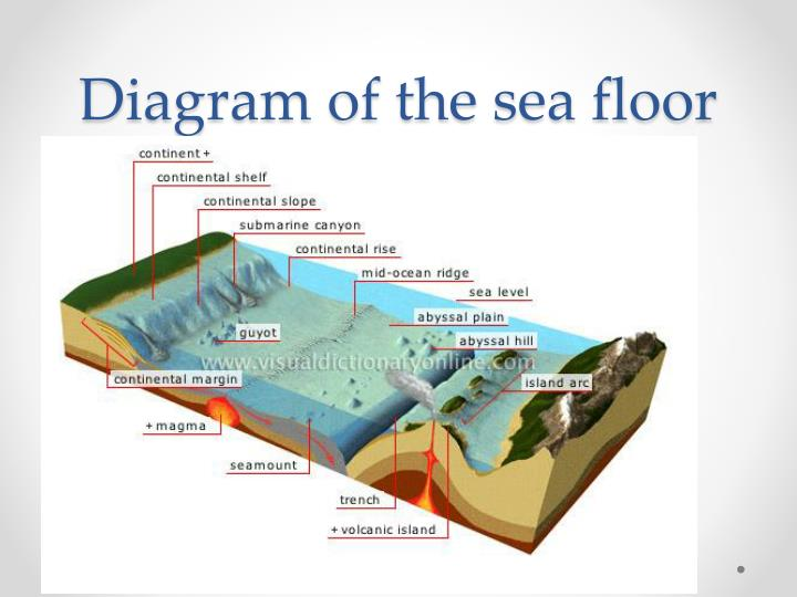 PPT  Parts of the    Ocean       Floor    PowerPoint Presentation  ID 2365377
