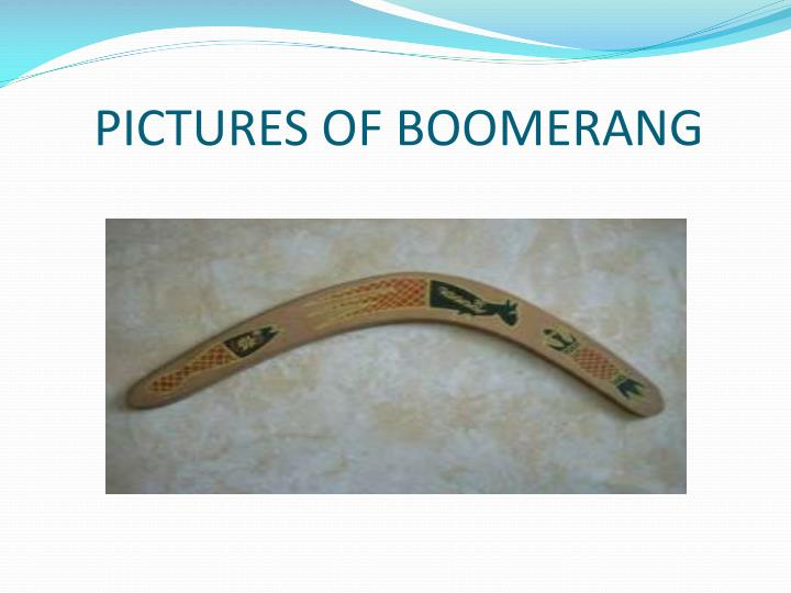 PICTURES OF BOOMERANG