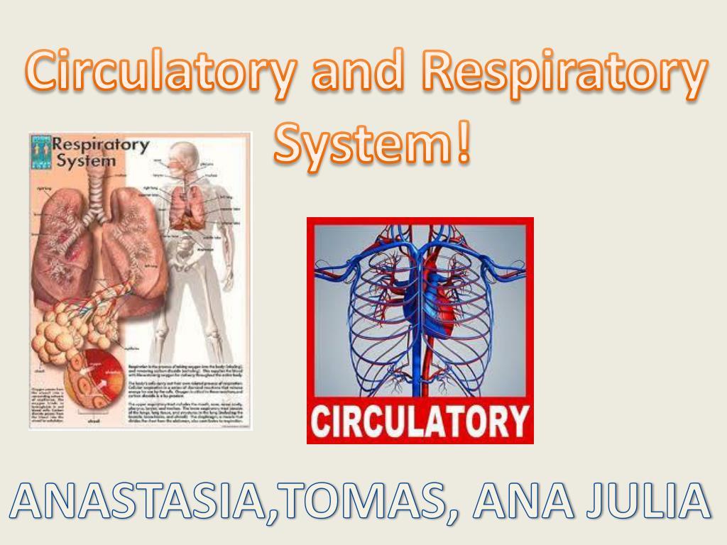 hillendale health circulatory system