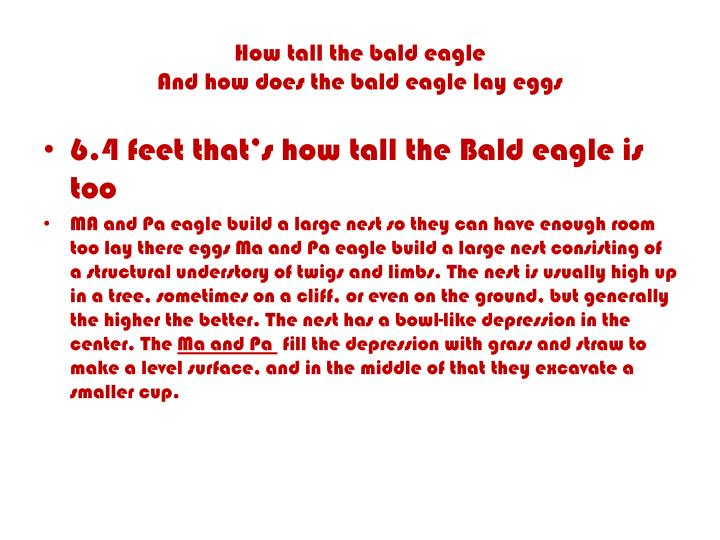 How tall the bald eagle