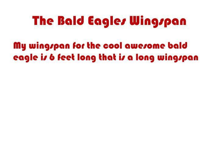 The Bald Eagles Wingspan