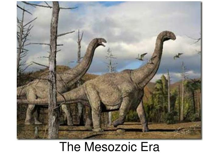 the mesozoic era The mesozoic era is also best known for the dinosaurs there was also a mass extinction during the mesozoic era the climate in this age of time was hot, dry, and desert like the sea levels were lower in this part of history than the times before the triassic period was a transition form the.
