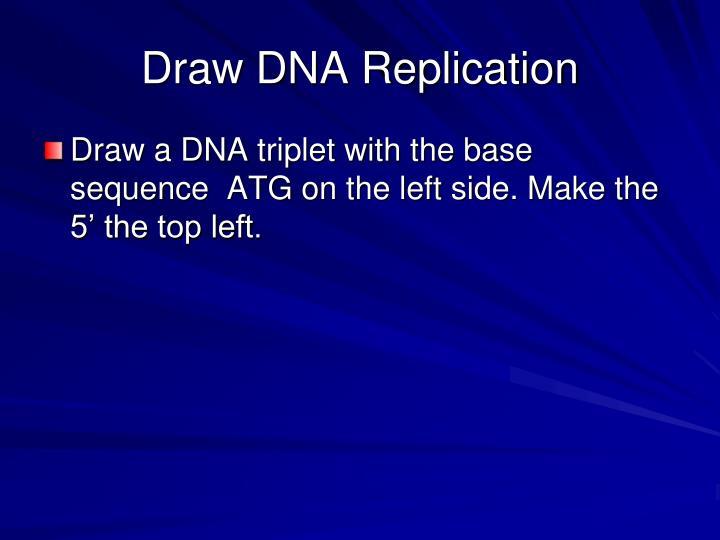 Draw DNA Replication