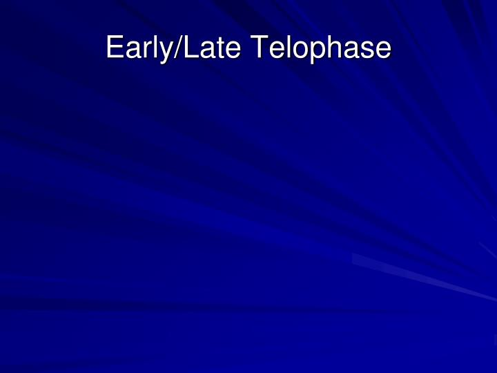 Early/Late Telophase
