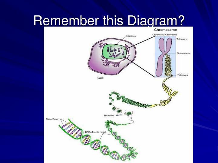Remember this Diagram?