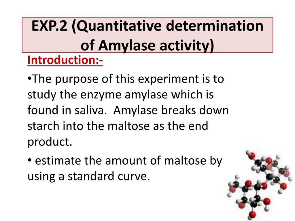 how does amylase break down starch