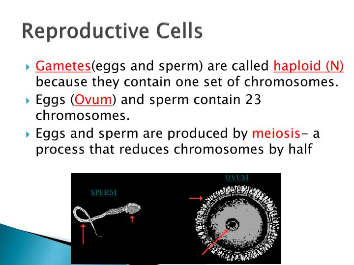 Reproductive Cells