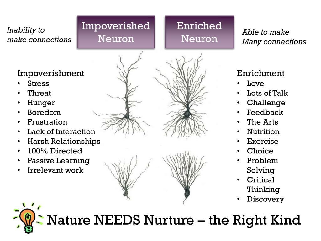 Image result for impoverished neurons