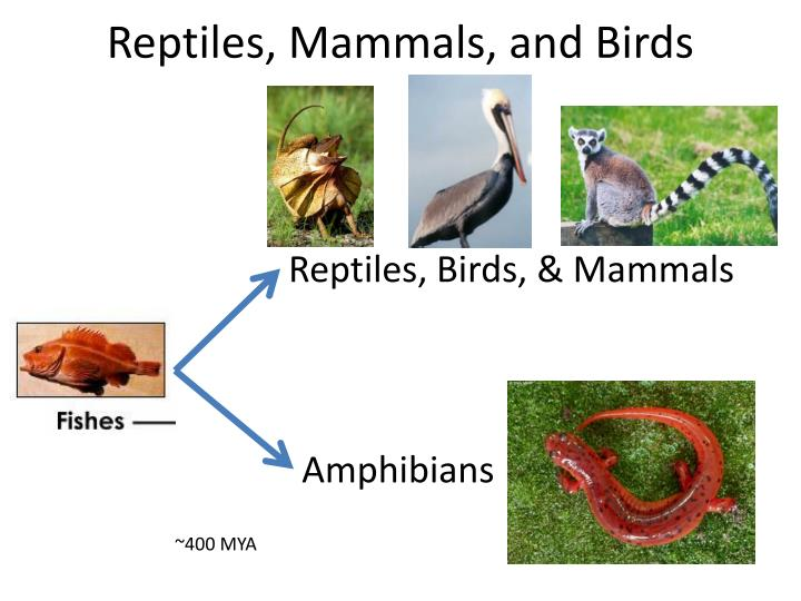 reptiles mammals and birds n.