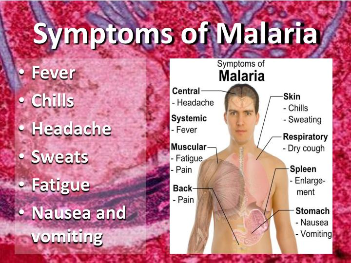 symptoms and diagnosis of plasmodium essay Malaria essay malaria essay causes of malaria plasmodium parasites are urine and saliva can also be used as alternative samples for diagnosis of malaria.