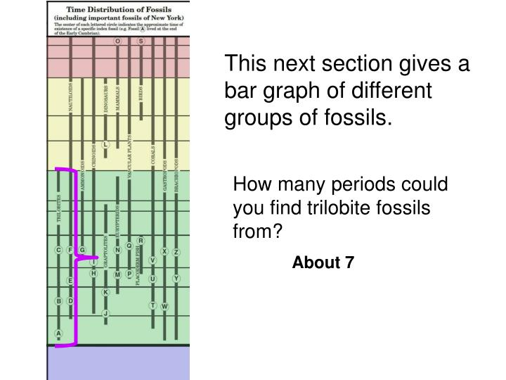 This next section gives a bar graph of different groups of fossils.