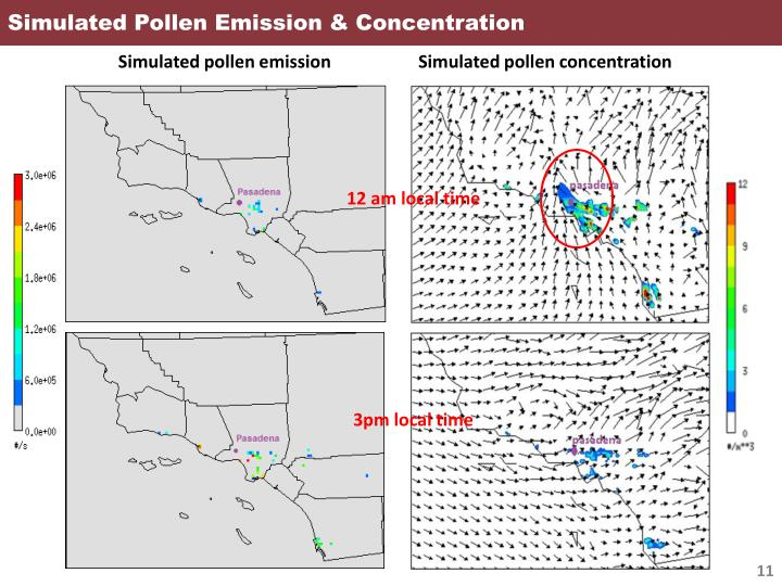 Simulated Pollen Emission & Concentration