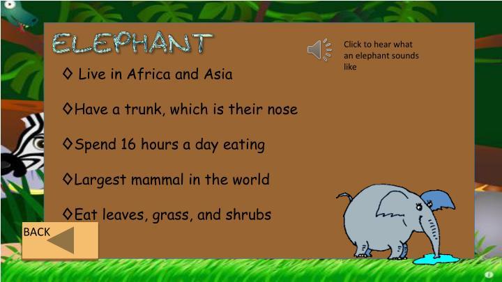 Click to hear what an elephant sounds like