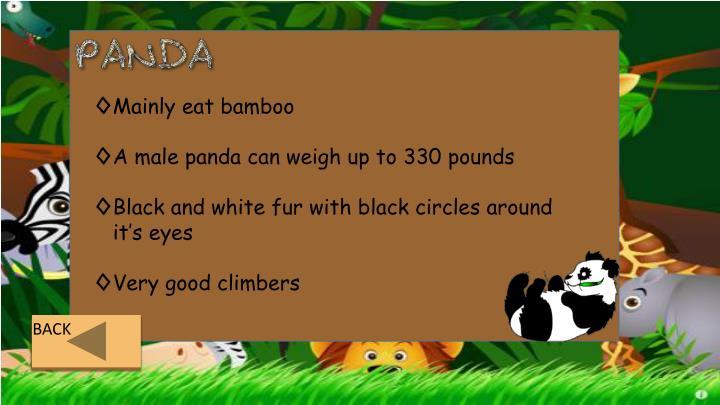Mainly eat bamboo