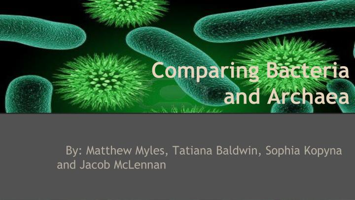 comparing bacteria and archaea n.