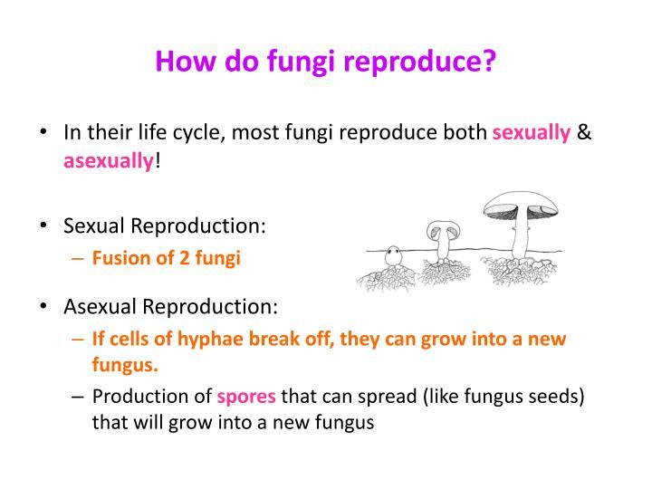 Can fungi reproduce sexually