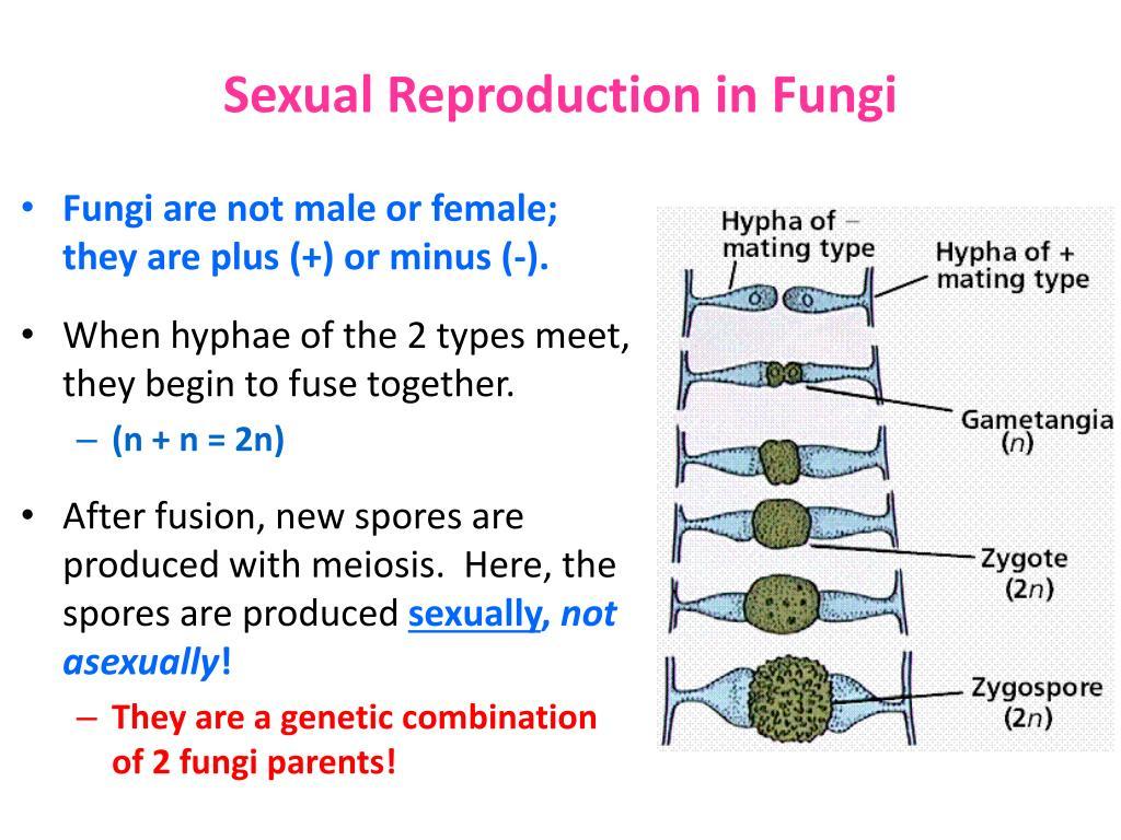 Fungi sex