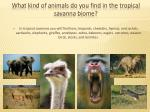 what kind of animals do you find in the tropical savanna biome