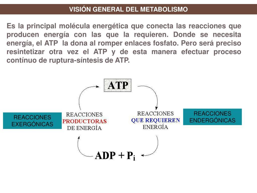 Metabolismo basal Ayudar