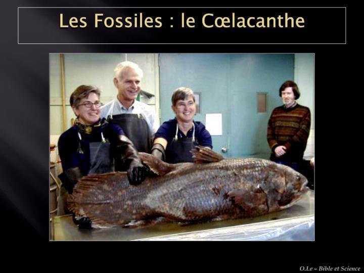 Les Fossiles : le Cœlacanthe