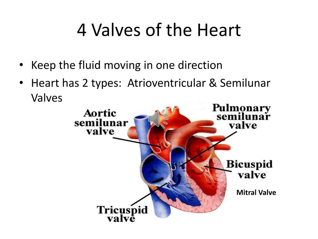 PPT - Chapter 12 Circulatory System PowerPoint ...