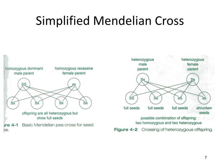 Simplified Mendelian Cross