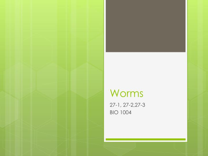 worms n.