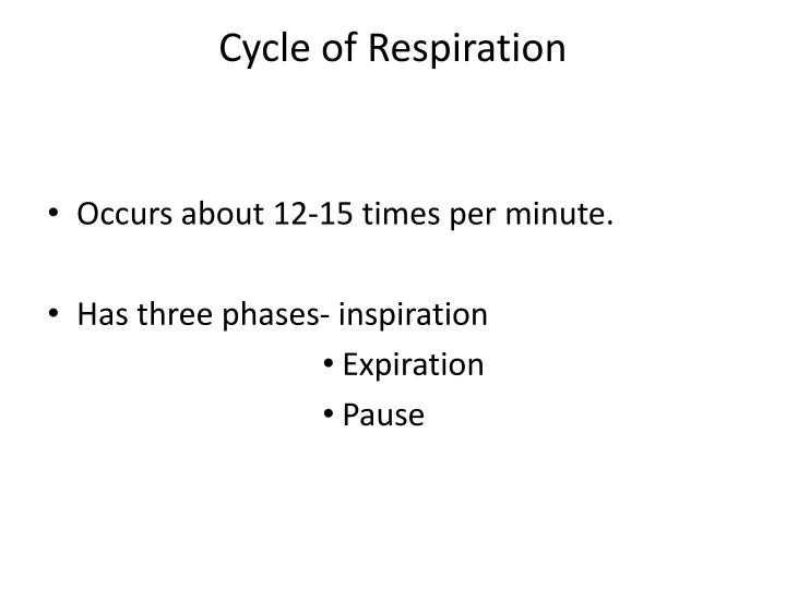 Cycle of Respiration