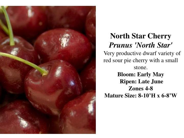 North Star Cherry