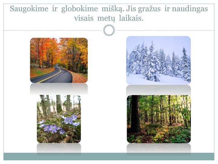 Saugokime  ir  globokime  mišką. Jis gražus  ir naudingas visais  metų  laikais.