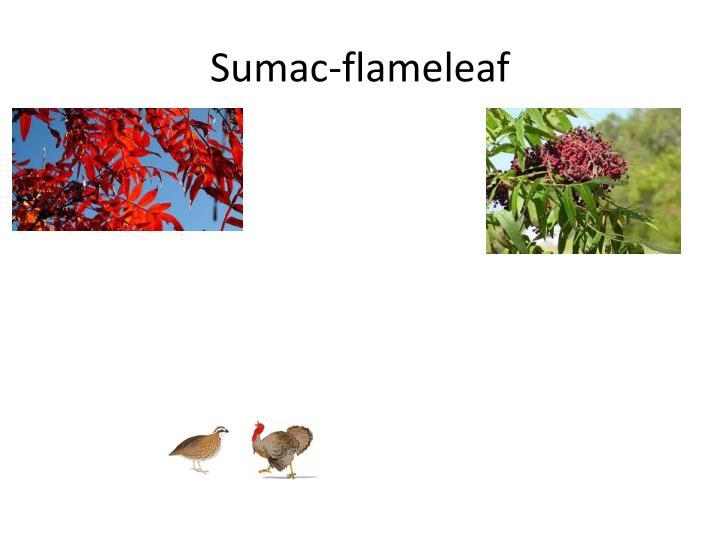 Sumac-