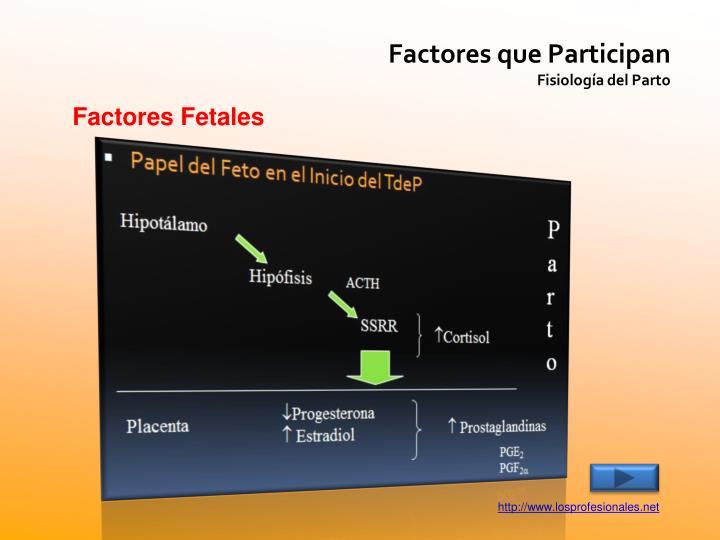 Factores que Participan