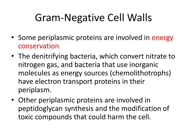 Gram-Negative Cell Walls