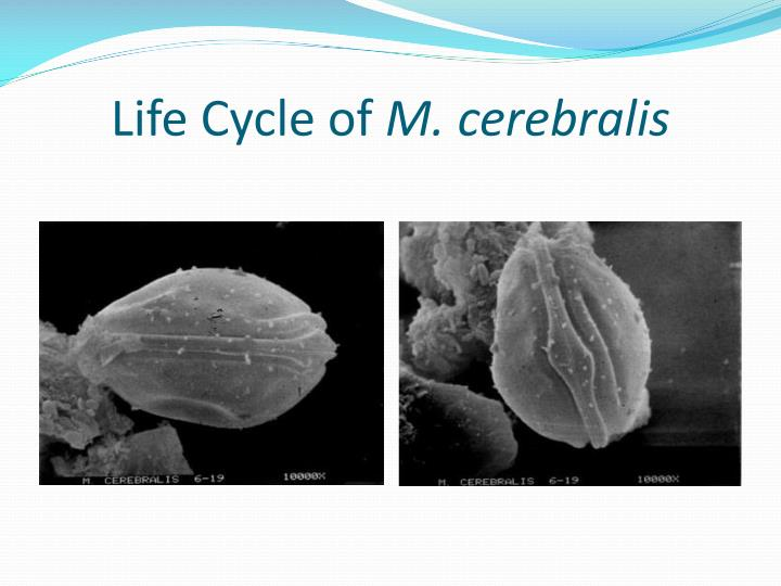 Life Cycle of