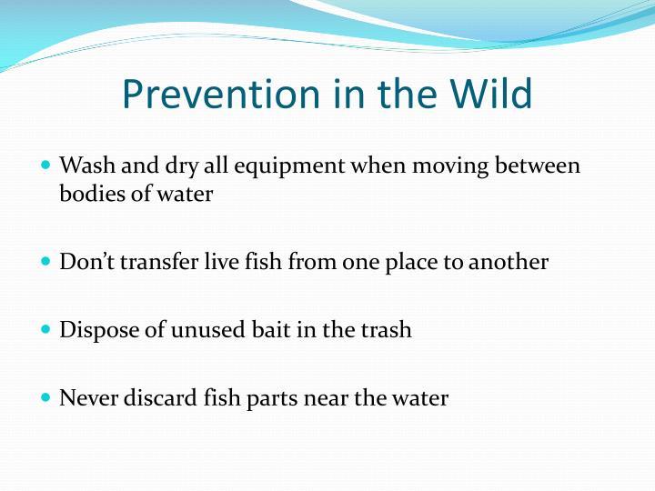 Prevention in the Wild