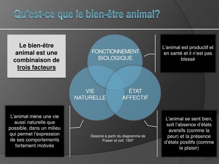 Qu'est-ce que le bien-être animal?