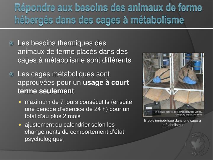 Répondre aux besoins des animaux de ferme hébergés dans des cages