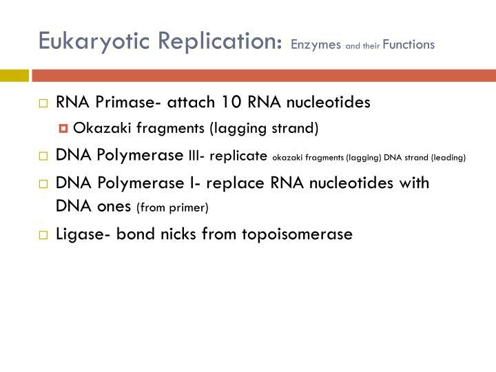 Eukaryotic Replication:
