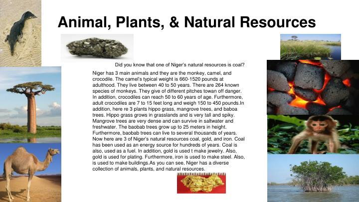 Animal, Plants,