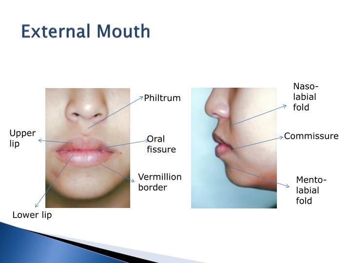 Anatomy of the Nose |External Lip Anatomy
