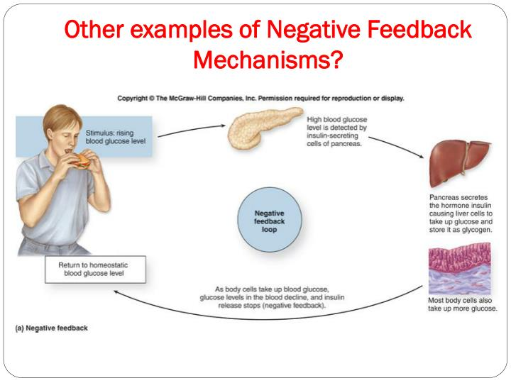 Negative Feedback Loop Definition Anatomy All About Costumes