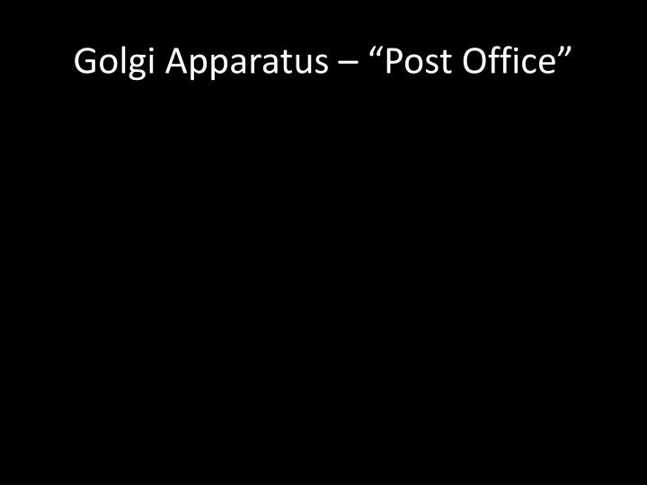 "Golgi Apparatus – ""Post Office"""